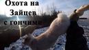 Охота на Зайцев с гончими 2020. Молодой выжлец Бархан раскрывает свои умения Кировская область.