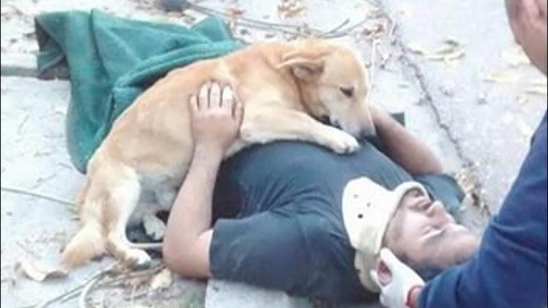Никому никогда тебя не отдам! Пёс обнял парня лапами и не сдвинулся с места… Невероятная история