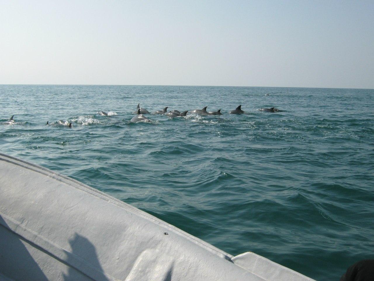 зрелище с дельфинами между островами Кешм и Хинган