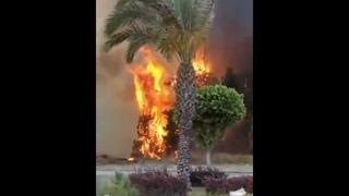 Лесной пожар в турецкой Анталье не представляет опасности для туристических объектов