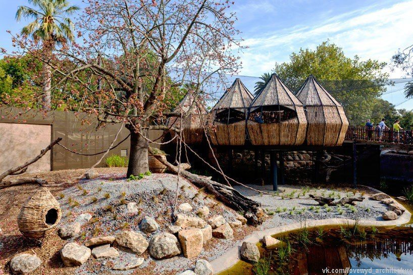 OLA nestles rattan-woven pods at melbourne zoo for immersive lemur exhibit