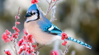 🐦Beautiful Animal In Winter + Snow Scene Relaxing Piano Music - Sleep Meditation Spa Yoga Music #16