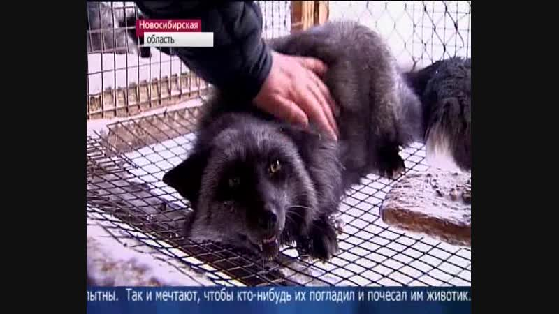 Новости (Первый канал, 08.12.2012) Выпуск в 10:00