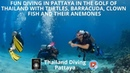 Fun diving in Pattaya in the golf of Thailand with turtles, barracuda, clown fish and their anemones