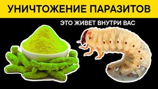 8 продуктов для МОМЕНТАЛЬНОГО ВЫВЕДЕНИЯ мерзких ГЛИСТОВ и ПАРАЗИТОВ. Результат через 2 часа