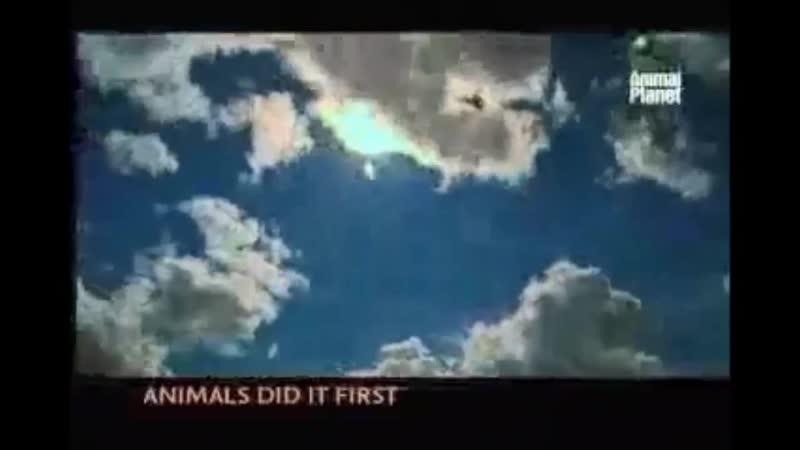 Проморолик канала Animal Planet 2004 2006 г 10