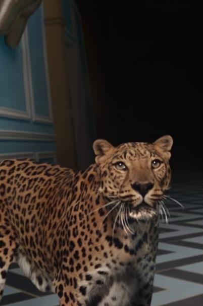 Фанаты возмутились тем, что в клипе Карди Би были сняты экзотические животные.