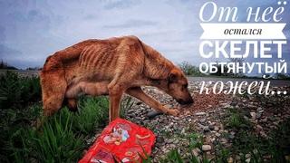 Спасение собаки скелета с трассы....