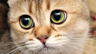 Приколы с животными   кошак   Тест на психику   лучшие приколы   котики