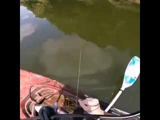 Как вы думаете - это рыбак rfr ds levftnt - 'nj hs,fr