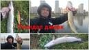 Щука на джерк . Рыбалка в городе. Street fishing в Санкт-Петербурге