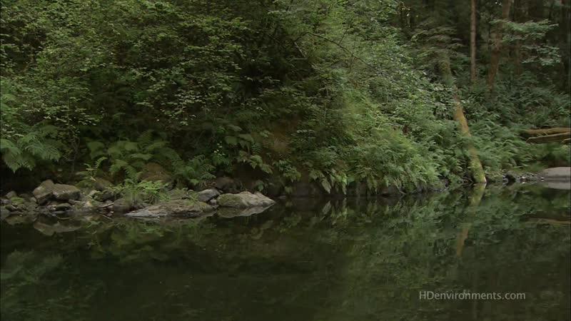 Живые Пейзажи - Калифорнийские секвойи Living Landscapes - California Redwoods 2008