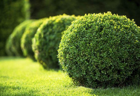 Хвойные растения: советы по подбору и посадке, изображение №4