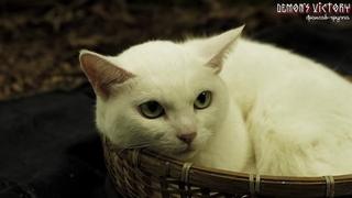 Самурай и кошка (полнометражный).