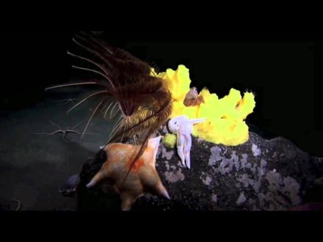 Heidi Mortenson Lyset Official Video