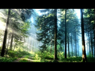 Forest Birdsong Ambience with Beautiful Calm Music - Relaxing Nature Sounds in the Woods