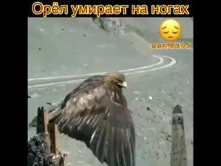 Лишь два существа достойны своей смерти- это волк и орел. Оба умирают тихо, не издав ни стона.