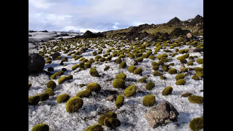 Таинственные зеленые ледниковые мыши
