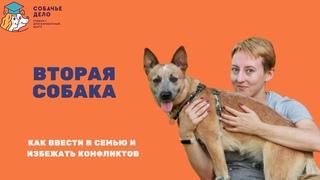 Вторая собака в семье. Как избежать конфликтов