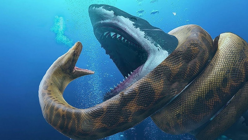 Самый ОПАСНЫЙ хищник океана АКУЛА Мегалодон Белая акула Акула гоблин