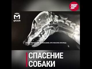 Самые обсуждаемые новости в соцсетях Татарстана от 22 декабря 2020 года