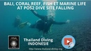 Bali, coral reef, fish et marine life at POS2 dive site Falling with Thailand Diving Pattaya Club