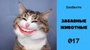Зубастик подборка 017. Смешные животные. Забавные озвучки животных. Говорящие коты. Приколы, юмор