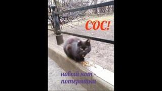 СОС! Два котика на улице... ищем им дом или передержку. Петербург