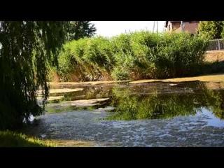 Солнечный окунь играет в реке Кильчень!