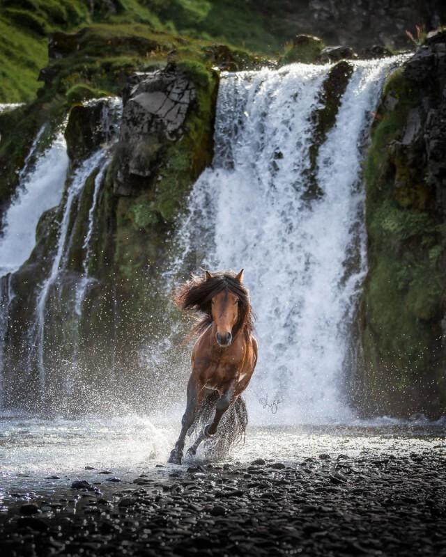 Афиша Самара Конная прогулка и Пикник у водопада 11 октября