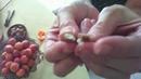 1 solution anti-cancer testée et approuvée : la vitB17 (amande d'abricot) - Coklico🌹