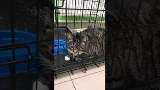 Хозяева хотели усыпить свою одноглазую кошку. Мы забрали ее в клинику и подписали с ними отказ.