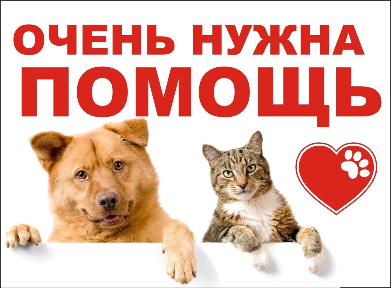 Днем, картинки нужна помощь животным