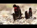 Удивительные насекомые Амазонии: великаны и карлики. Туроператор РуКолумб. rucolumb