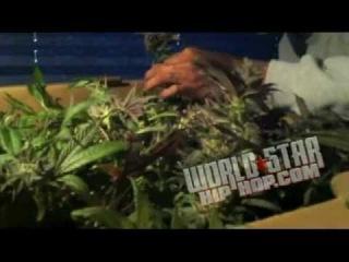 The Waken Baken Tour Pt. 2 With Wiz Khalifa & Berner! Part 1 (Choking Up On Some Smoke)
