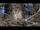 Shooting with Sparky Boreal Owl irruption Minnesota 2013