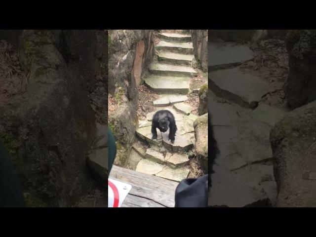 Macaco atira cocô e acerta em cheio na vovó