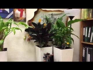 Цветы в офисе Мехди