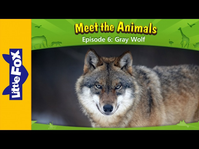 Meet the Animals 6 Gray Wolf Level 2 By Little Fox