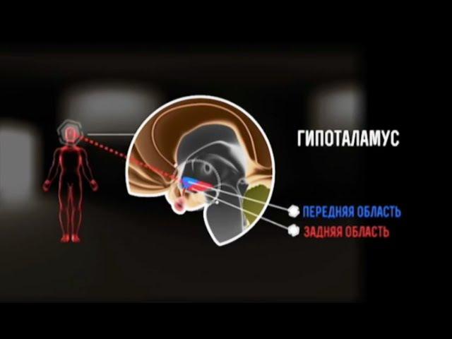 Шифры нашего тела Неизвестные органы Гипоталамус Гипофиз Эпифиз Познавательный фильм