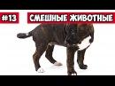 Собака на качеле эти смешные животные 13 Bazuzu Video ТОП подборка май 2017