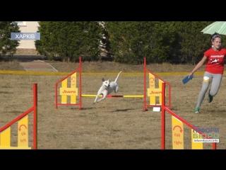 Спорт для чотирилапих улюбленців: у Харківській області відбулися національні змагання з Аджиліті