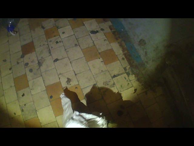 Спасатели МАСС ловят змею в квартире