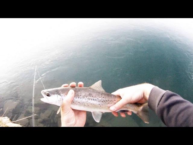 Softbait brown trout