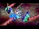 Amazing Molecular Machines in Your Body
