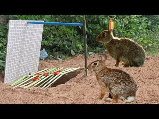 Amazing Quick Rabbit Trap Using Paiute Deadfall Trap & PVC Pipe, How To Make Rabbit Trap & Palm Tree