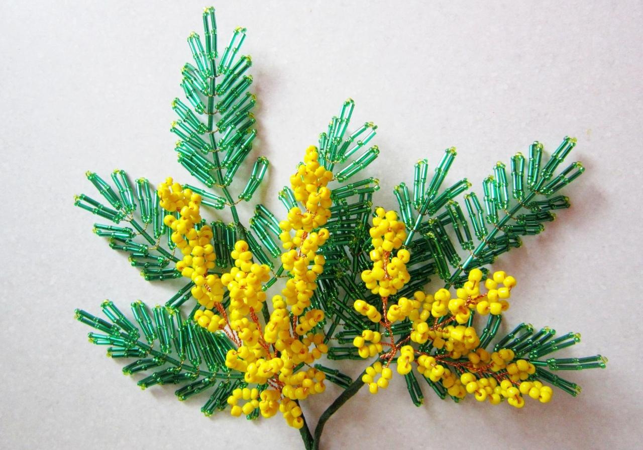 веточка мимозы фото цветка открыл первое стране