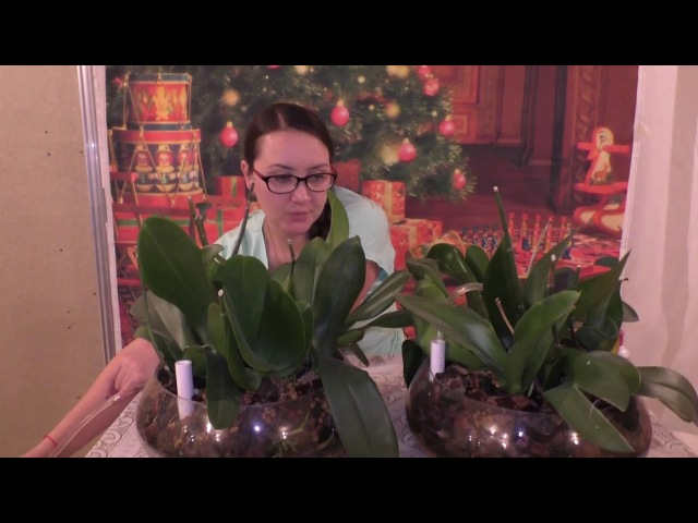 Полив 14 орхидей в закрытой системе с цеофлорой! Зачем нужна трубка