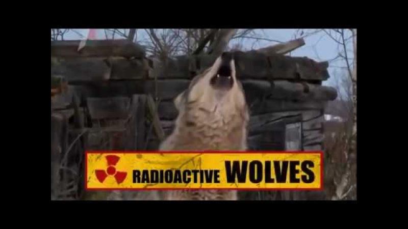 Радиоактивные волки Чернобыля Документальный фильм и факты про Чернобыль