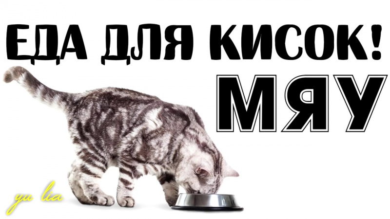 6 Чем нельзя кормить кошек и котят и как и чем правильно кормить котят и кошек!